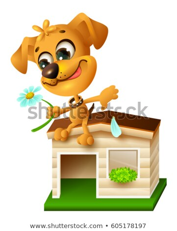 Funny yellow puppy sitting on doghouse and tearing off petal of chamomile Stock photo © orensila