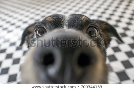 Close-up of a cute dog looking at camera Stock photo © ozgur