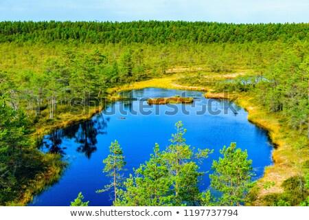 Parque Estonia naturaleza lago Europa panorama Foto stock © benkrut