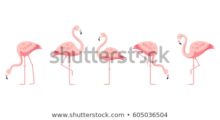 flamingo - vector illustration Stock photo © djdarkflower