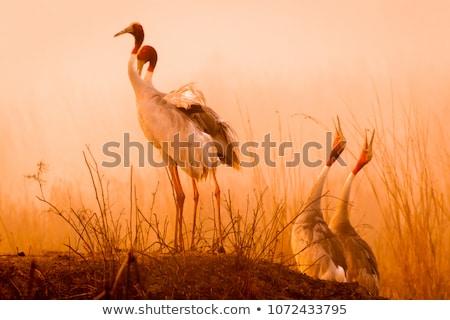 鳥 日光 森林 実例 花 ツリー ストックフォト © bluering