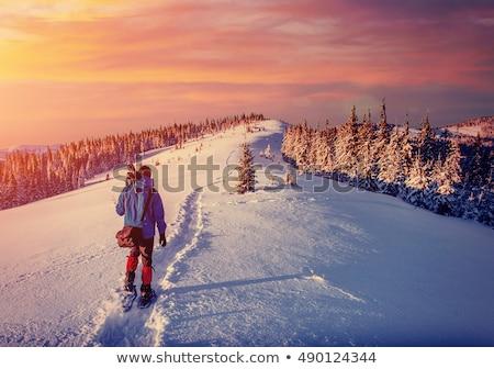 Geada caminho montanha floresta árvores plantas Foto stock © Kotenko