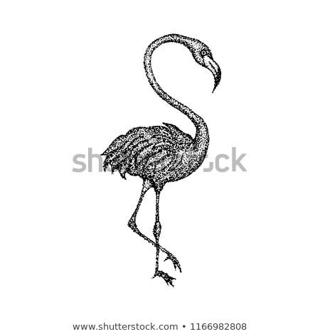 Rosa Flamingo tshirt design tattoo Foto d'archivio © Anna_leni