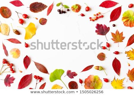 белый дерево природы дизайна лист фрукты Сток-фото © ungpaoman