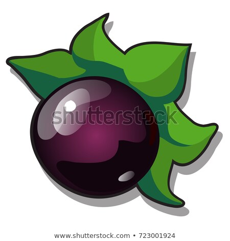 ripe fruit of atropa belladonna or deadly nightshade perennial herbaceous plant in nightshade famil stock photo © lady-luck