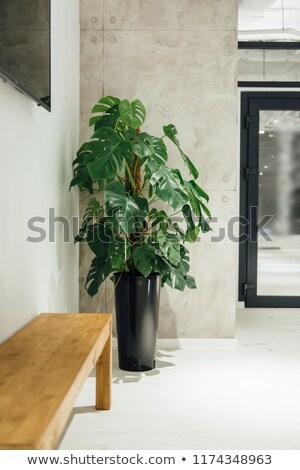 caseiro · planta · vaso · moderno · grande · quarto - foto stock © ruslanshramko