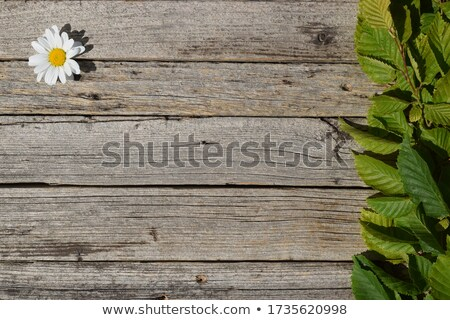 весны кадр белый зеленый оранжевый романтические Сток-фото © ElaK