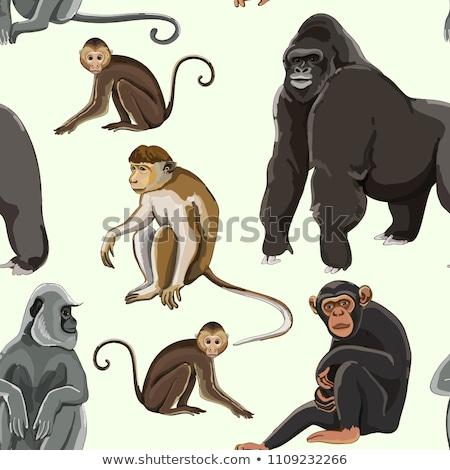 Stok fotoğraf: Different Types Of Monkeys Pattern