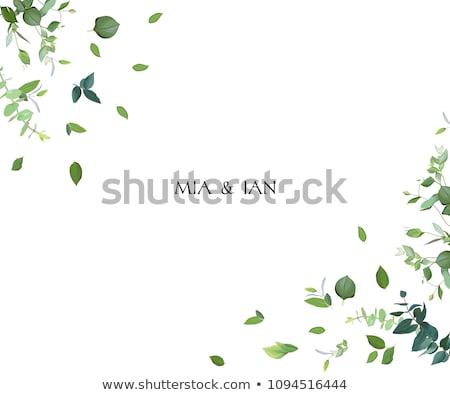 Vintage botânico folha quadro projeto folha de palmeira Foto stock © solarseven