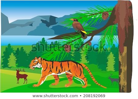 Silhouette tigre foresta illustrazione cielo panorama Foto d'archivio © colematt