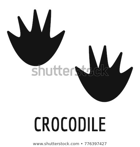 Zwarte voetafdrukken krokodil witte paard kunst Stockfoto © ratkom