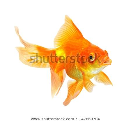 goudvis · illustratie · abstract · gouden · vis · kunst - stockfoto © bluering