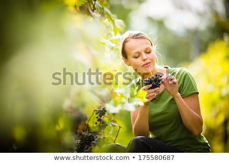 Man and Woman Gathering Grapes Vineyard Plantation Stock photo © robuart