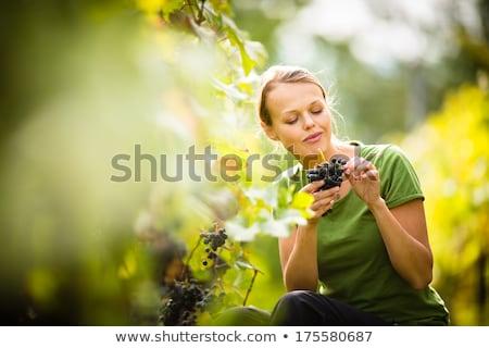 Man and Woman Gathering Grapes Vineyard Plantation Stock photo © robuart