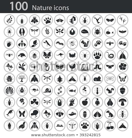 Natuur ingesteld insecten planten illustratie vis Stockfoto © bluering