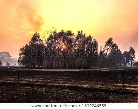 Burnt out tree in a bushfire ravaged landscape Stock photo © lovleah