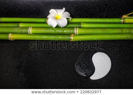 pembe · su · damlası · yalıtılmış · beyaz · bahçe · bitki - stok fotoğraf © adamson