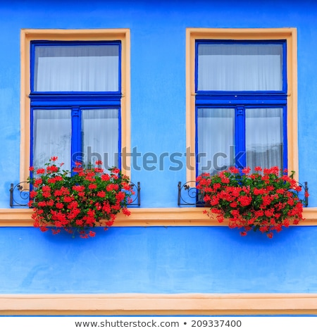 window with flowers in brasov romania stock photo © travelphotography