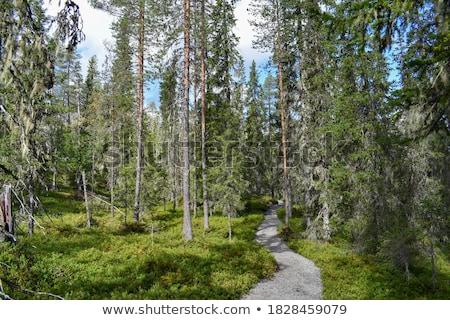 樹 森林 和諧 美麗 樹 春天 商業照片 © meinzahn