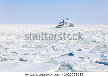 氷 · 茂み · 冬 - ストックフォト © srnr