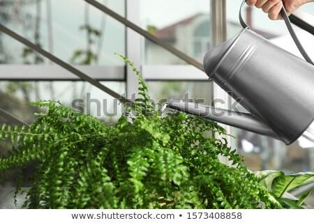 színes · locsol · retro · izolált · fehér · kertészkedés - stock fotó © dinozzaver