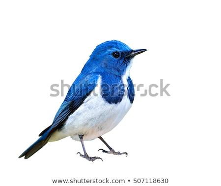Pequeno pássaro sessão rocha nuvens fundo Foto stock © Discovod