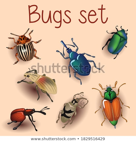Bronze beetle Stock photo © taden