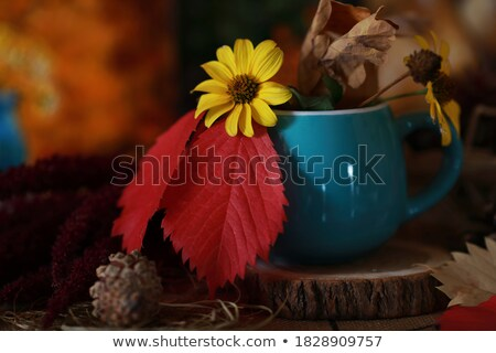 Fall leaf rests on a woman's winter boots stock photo © sarahdoow