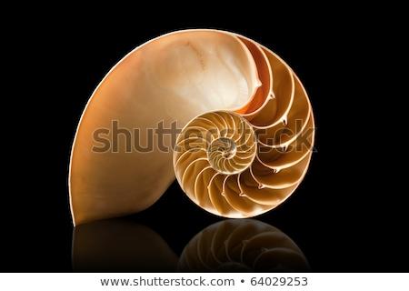 Deniz kabuk siyah doğa arka plan okyanus Stok fotoğraf © EwaStudio