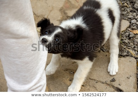 犬 · 孤立した · グレー · 肖像 · 面白い · 白 - ストックフォト © tilo