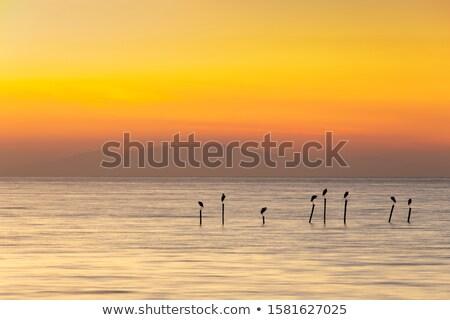 海景 黄昏 長時間暴露 ビーチ 空 ストックフォト © Juhku