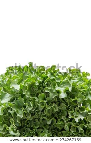 Függőleges fenék keret frissen friss saláta Stock fotó © ozgur