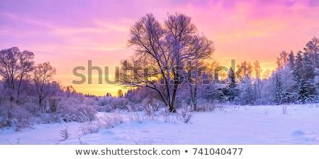 szürkület · tél · este · tájkép · hegy · kunyhó - stock fotó © Kotenko
