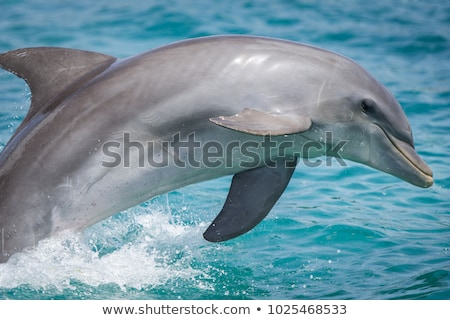close up of a dolphing swimming stock photo © njnightsky