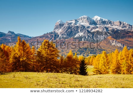 Magical yellow larches. Location place Dolomiti Alps, Cortina d' Stock photo © Leonidtit