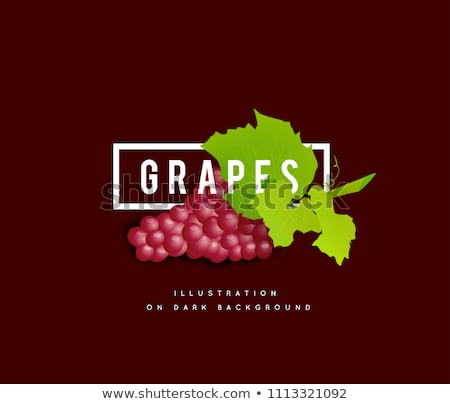 grape branch with red grapes realistic vector illustartion stock photo © m_pavlov