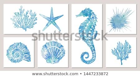 Set blu conchiglia illustrazione mare design Foto d'archivio © bluering