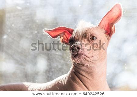 Csúnya kutya áll rajz illusztráció grafikus Stock fotó © cthoman