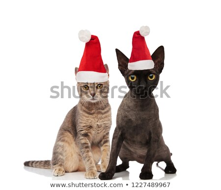cute · chat · chapeau - photo stock © feedough