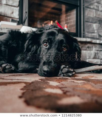 Imádnivaló nappali belső kő kandalló fa Stock fotó © iriana88w