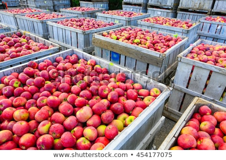 maçãs · grama · fruto · blue · sky · maçã - foto stock © bdspn