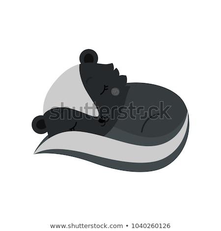 Cartoon skunks ilustracja szczęśliwy Zdjęcia stock © cthoman
