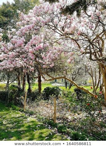 Yeşil ağaçlar bahçe Paris alan Fransa Stok fotoğraf © vapi