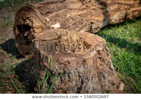 scene with chopped trees on the ground stock photo © colematt