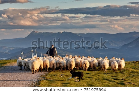 Sheep Farming Man, Shepherd with Herd on Nature Stock photo © robuart