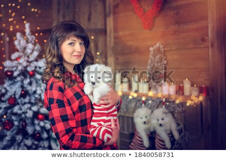 Christmas festival. Lovely happy woman holds pedigree dog on hands, decorates New Year tree, holds w Stock photo © vkstudio