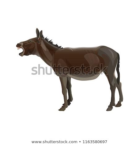Donkey Realistic Vectoral Illustration. White Background Isolated. Stock photo © Zhukow