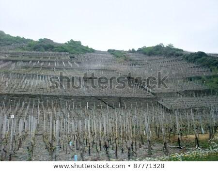 Vineyard In The Vulkan Eifel Photo stock © PRILL