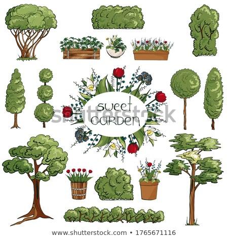 verano · árbol · verde · ornamento · hierba · hoja - foto stock © freesoulproduction