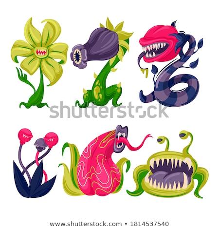 carnivorous plants Stock photo © gewoldi